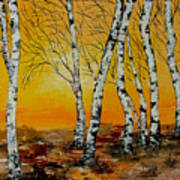 Sunset Birches Poster