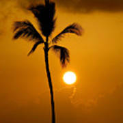 Sunset Coconut Palm Maui Hawaii Poster