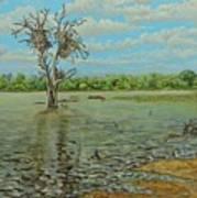 Sunset Dam Kruger Park Poster