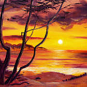 Sunset From A Carmel Cypress Tree  Poster