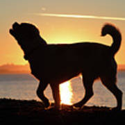 Sunset Howl Poster