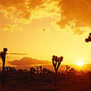 Sunset, Joshua Tree Park, California Poster