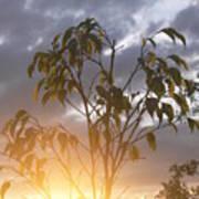 Sunset Leaves 2 Poster