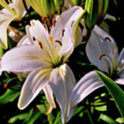 Sunset Lilies Poster