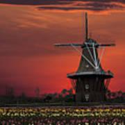 Sunset On Windmill Island Poster