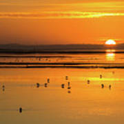 Sunset Over Arcata Marsh, With Avocets Poster