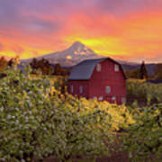 Sunset Over Mt Hood And Red Barn Poster