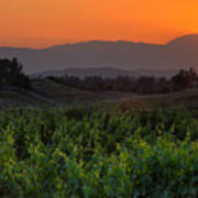 Sunset Over The Vineyard Poster by Peter Tellone