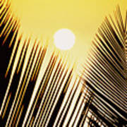Sunset Palm Fronds Poster
