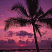Sunset Palms Poster