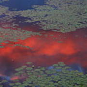 Sunset Reflection In Pond Poster