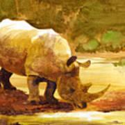 Sunset Rhino Poster