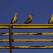 Sunset Seagulls Poster
