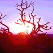 Sunset Through Silhouetted Tree In Desert 2 Poster