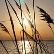Sunset Through The Dune Grass Poster
