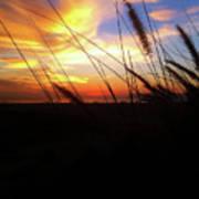 Sunset Through The Sea Grass Poster