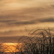 Sunset Through The Seagrass Poster