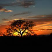 Sunset Tree Poster