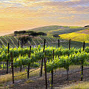 Sunset Vineyard Poster by Sharon Foster
