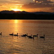 Sunset With Geese 2 Poster