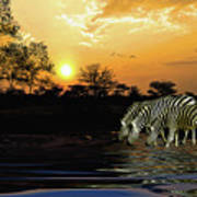 Sunset Zebras At The Watering Hole Poster