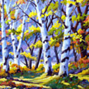 Sunshine And Birches Poster