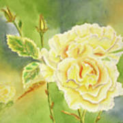 Sunshine And Yellow Roses Poster