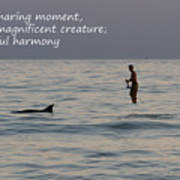 Sup With Dolphin - Haiku Poster