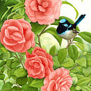 Superb Wren And Camellia Poster