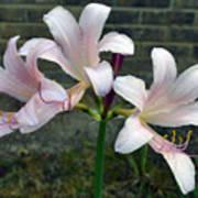 Surprise Lilies Poster