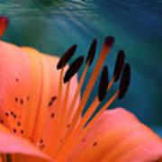 Surreal Orange Lily Poster