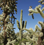 Surrounded Saguaro Cactus Wren Poster