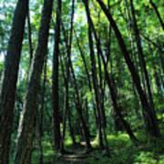 Susan Creek Indian Mound Trail Poster