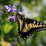 Swallowtail Butterfly 2 Poster