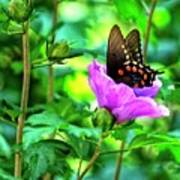 Swallowtail In Flower Poster