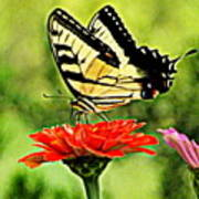 Swallowtail Resting Poster