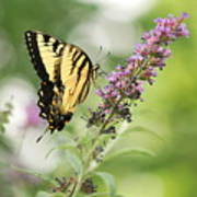 Swallowtail Stance Poster