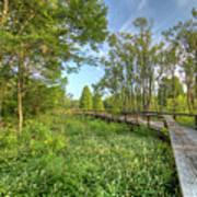 Swamp Garden Magnolia Plantation Poster