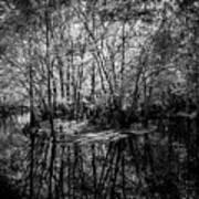 Swamp Island Poster