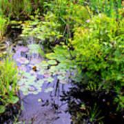 Swamp Plants Poster