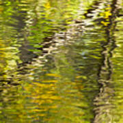 Swamp Reflections Abstract Poster