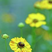 Swamp Sunflower Poster