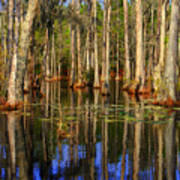 Swamp Trees Poster
