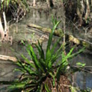 Swamp Vegetation Poster