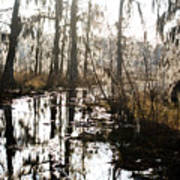 Swamps Of Louisiana 5 Poster