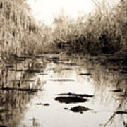 Swamps Of Louisiana 6 Poster