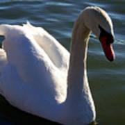 Swan 000 Poster