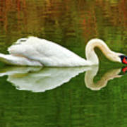 Swan Heart Poster