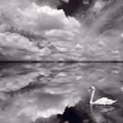 Swan Lake Explorations B W Poster