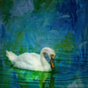 Swan On A Blue And Green Lake Poster